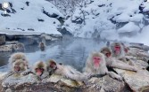 Jon Rafman<br /> <i>Jigokudani Monkey Park, Yamanouchi, Japan,</i> 2012<br /> Archival pigment print mounted on dibond<br /> 40 x 64 inches<br /> 101.6 x 162.6 cm<br /> Edition of 1